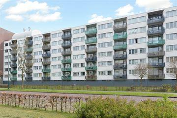 Duindoornstraat 7