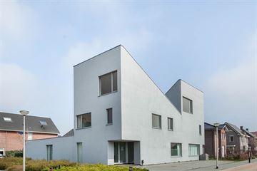 Sandelhout 3