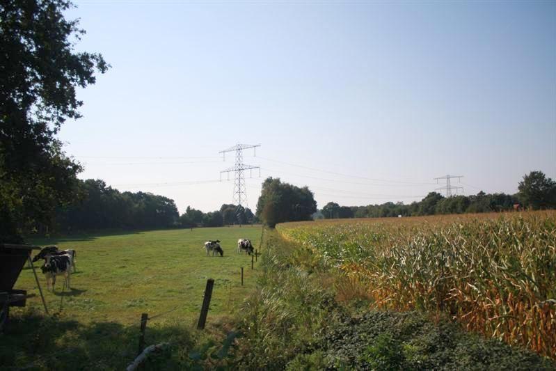 Bekijk foto 3 van Vlierdijk