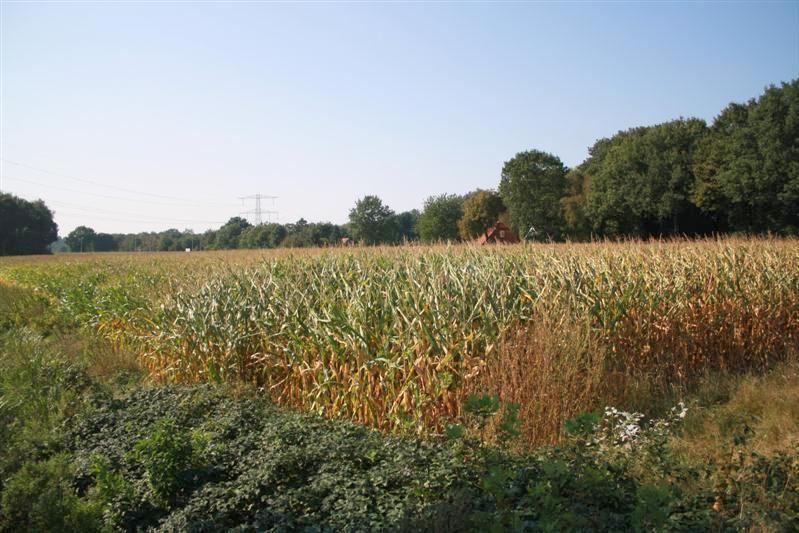 Bekijk foto 4 van Vlierdijk