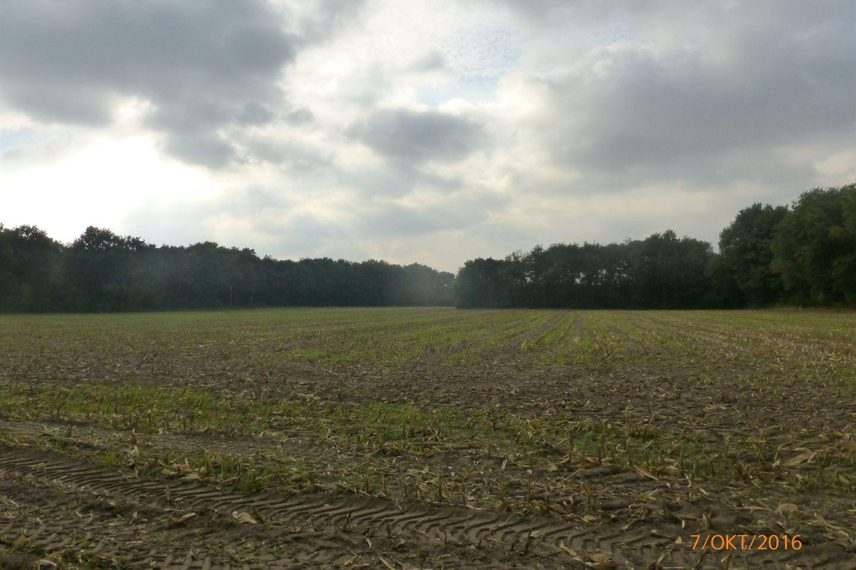 Bekijk foto 3 van Grensweg