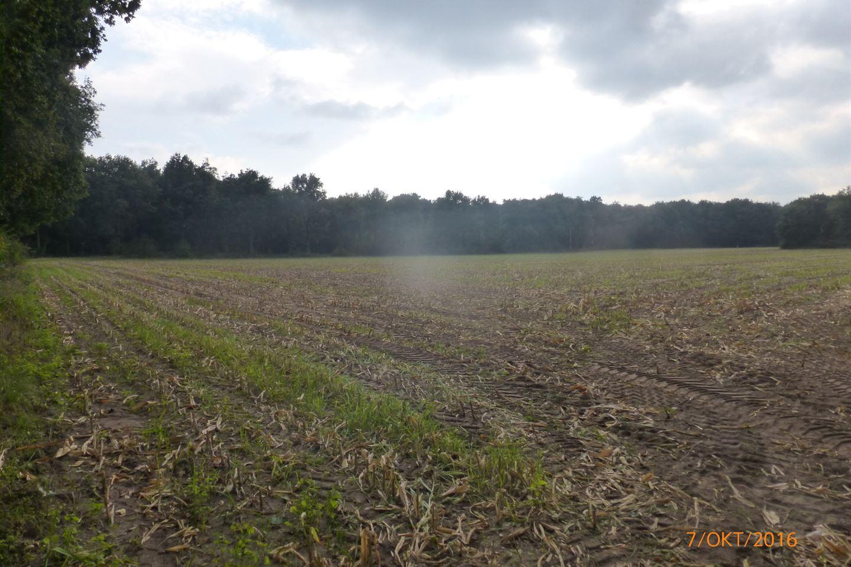 Bekijk foto 4 van Grensweg