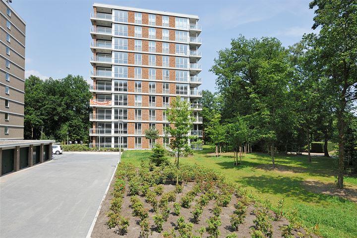 Boschvelt - Heide