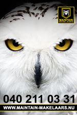 The Owl -