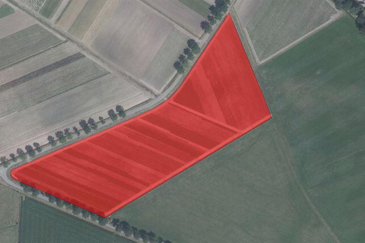 Kalmthoutsebaan perceel boomkwekerij grond, Wernhout