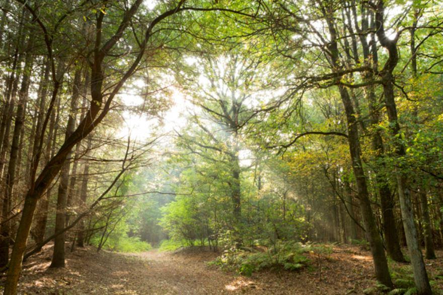 Bekijk foto 5 van Klein Oosterhout