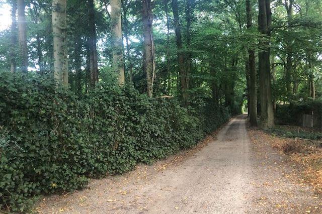 Bekijk foto 2 van Steenbergen