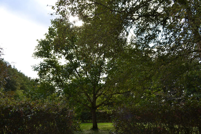 Bekijk foto 3 van Kiezelweg 21