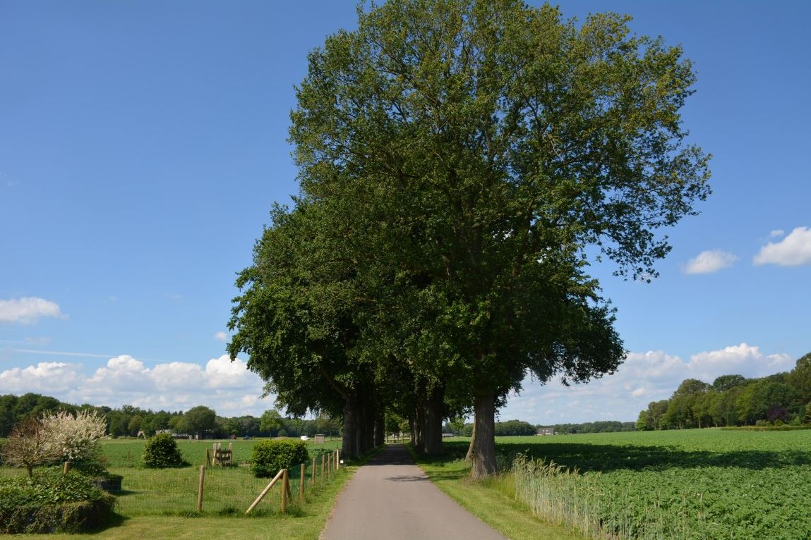 Bekijk foto 4 van Malbergerweg 2 A