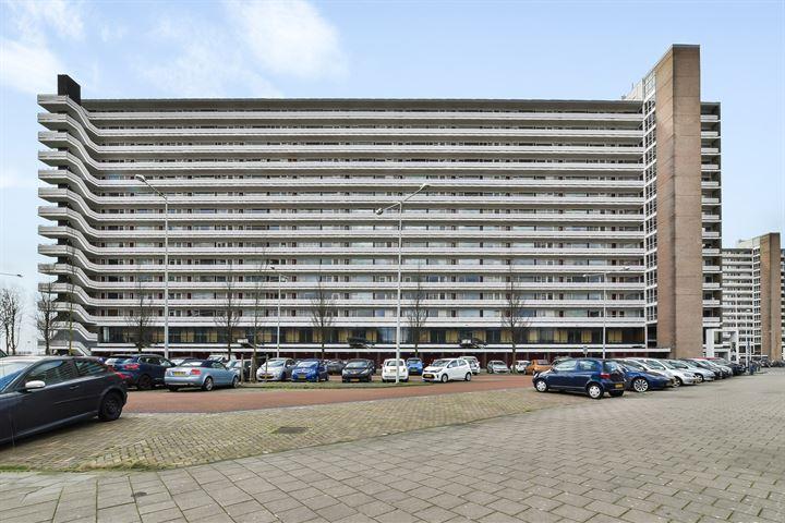 Burgemeester Hogguerstraat 559