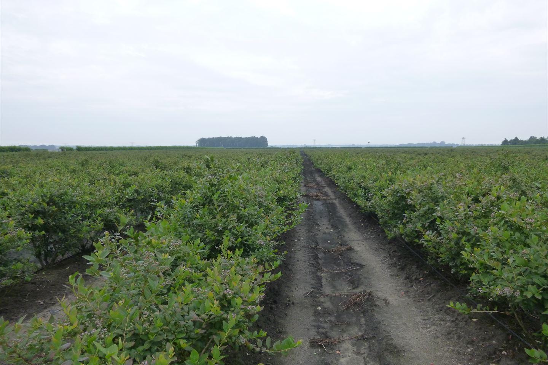 Bekijk foto 4 van Gasselterboerveen