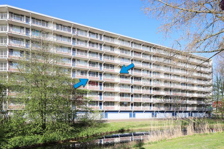 Condorhorst 81