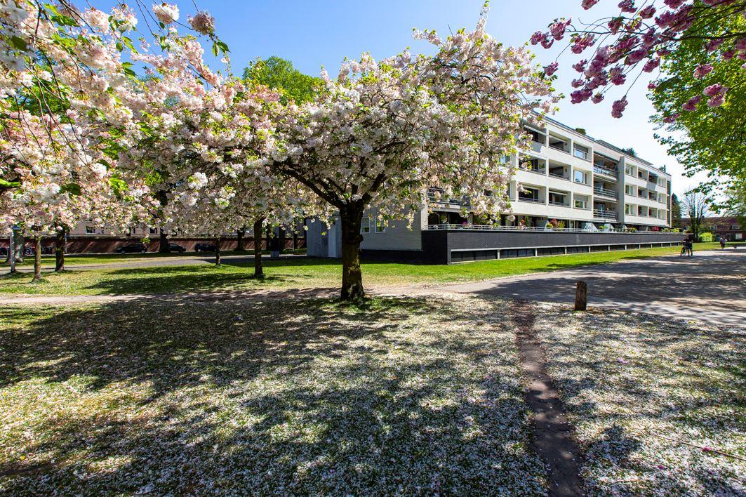 Bekijk foto 2 van Henriette Ronnerstraat 64