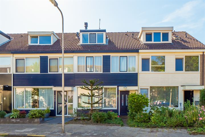 Couwenhoven 4203