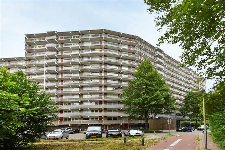 Jonkerbos 246