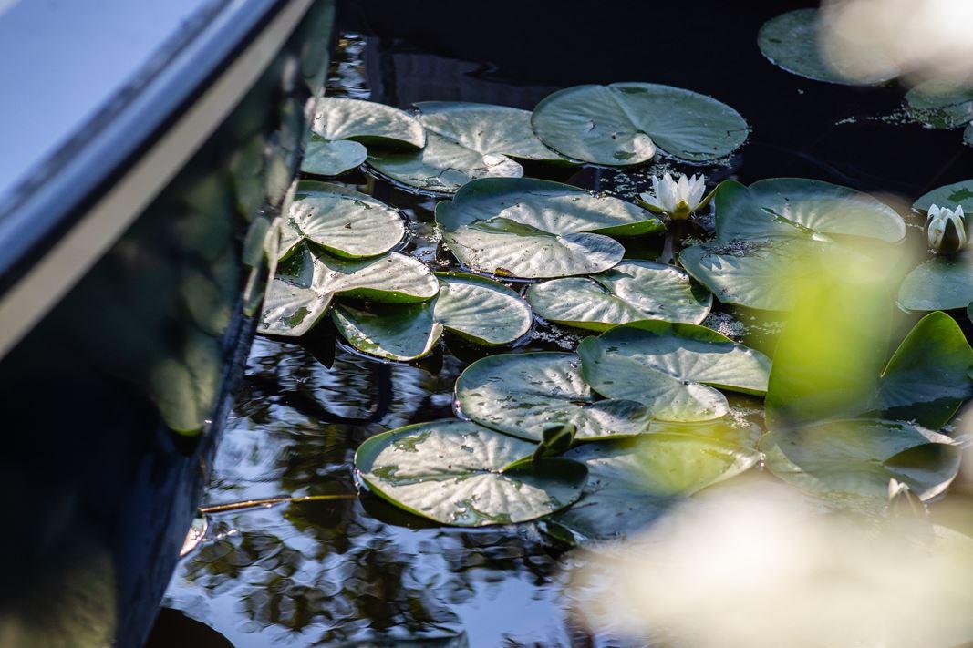 Bekijk foto 3 van Ringdijk 454