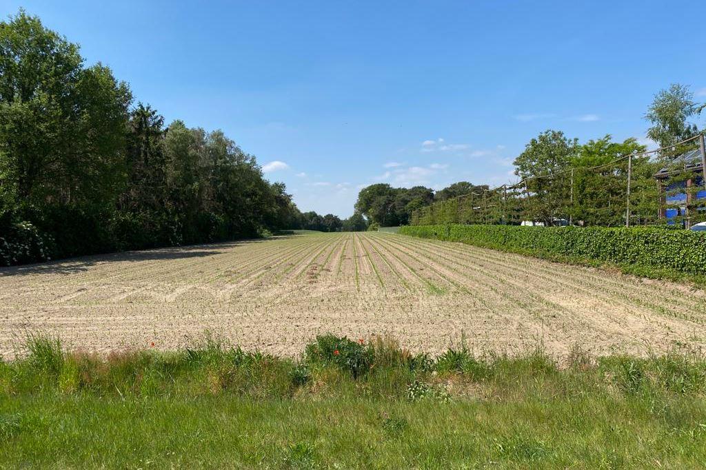 Bekijk foto 2 van Echterboschbaan