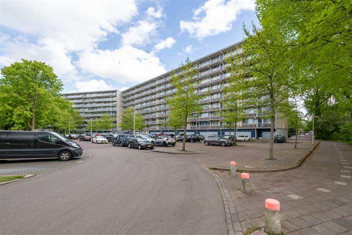 Condorhorst 115