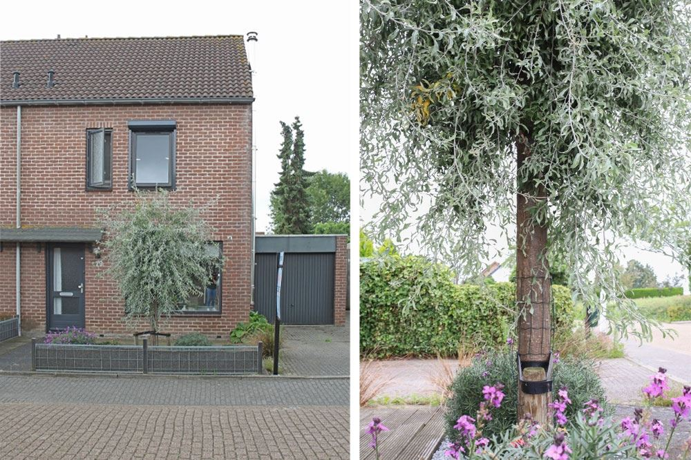 Bekijk foto 3 van Ruysdaelstraat 29