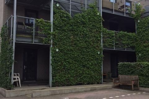 Bekijk foto 1 van Reinaldstraat 31