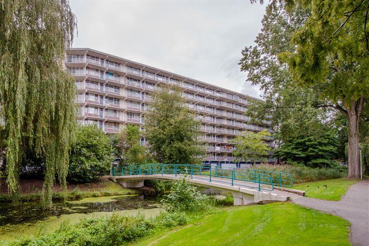 Condorhorst 143