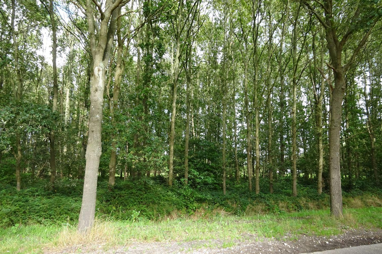 Bekijk foto 2 van Roosendaalseweg