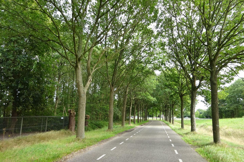 Bekijk foto 3 van Roosendaalseweg