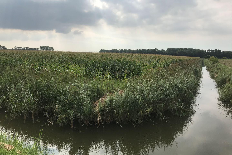 Bekijk foto 3 van Veertweg