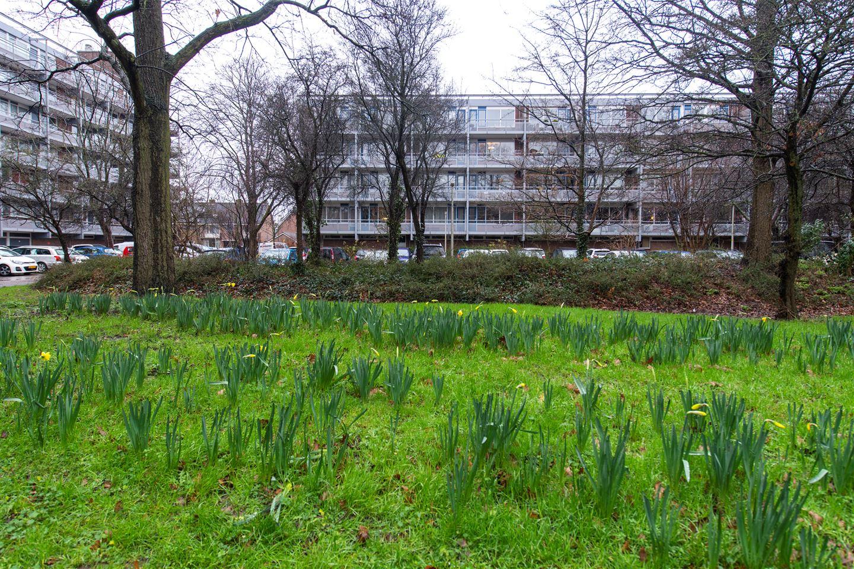 Bekijk foto 1 van Koolmeesstraat 34