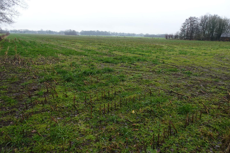 Bekijk foto 3 van Emsbroekweg 4 nabij