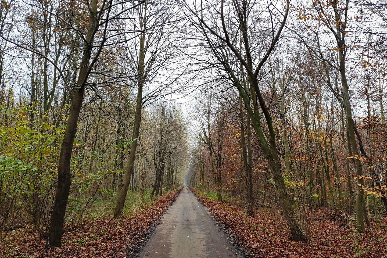 Bekijk foto 3 van Oostwoldjerweg 3