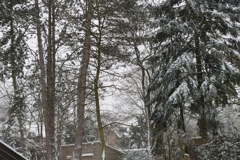 Bekijk foto 2 van Burggraafstraat 13