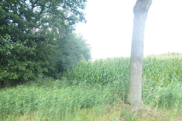 View photo 3 of Traandijk