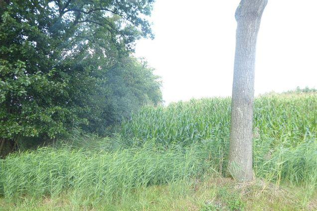 View photo 4 of Traandijk