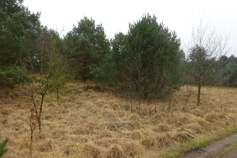 View photo 5 of Putseweg