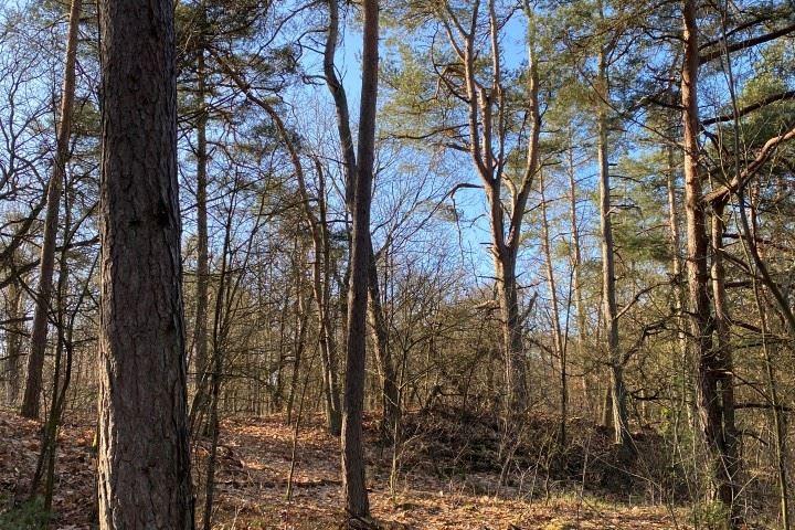 Bekijk foto 4 van Wipselbergweg