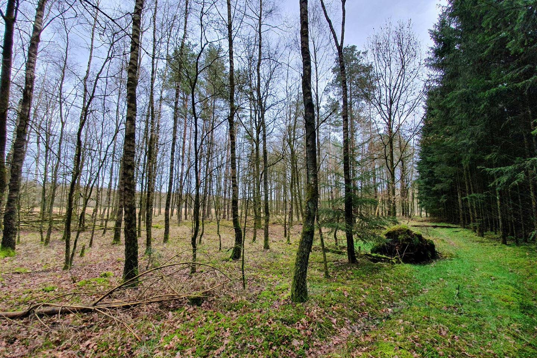 Bekijk foto 3 van nabij Gasselterweg