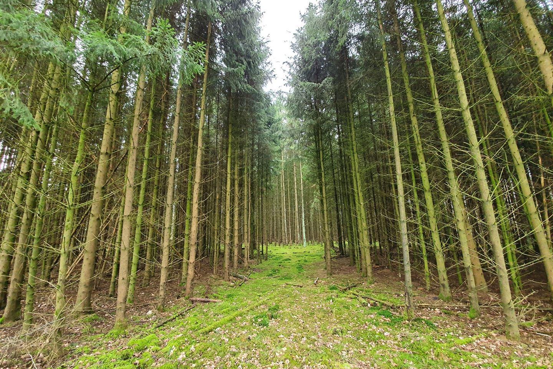 Bekijk foto 4 van nabij Gasselterweg