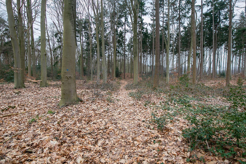 Bekijk foto 3 van Ruiterweg 27 A