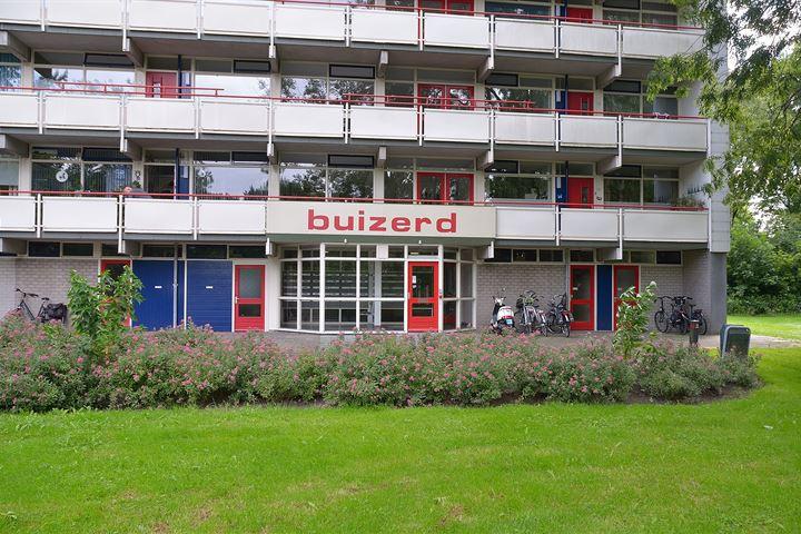 Buizerd 43