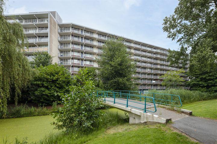 Condorhorst 160