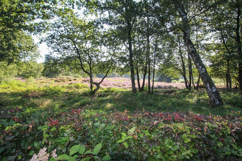 Bekijk foto 2 van Hooiweg 29 -68