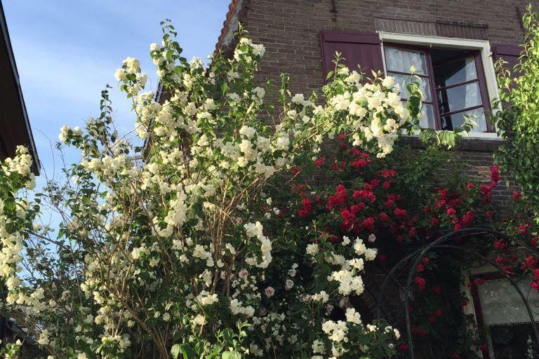 Bekijk foto 5 van Gravenstraat 3