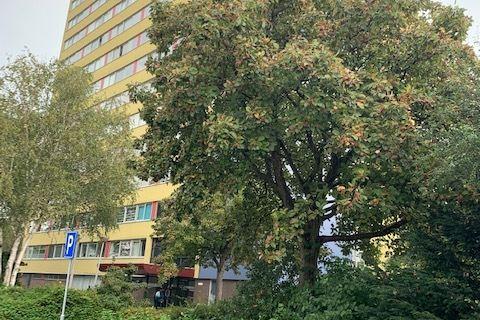 Bekijk foto 5 van Boeierstraat 151