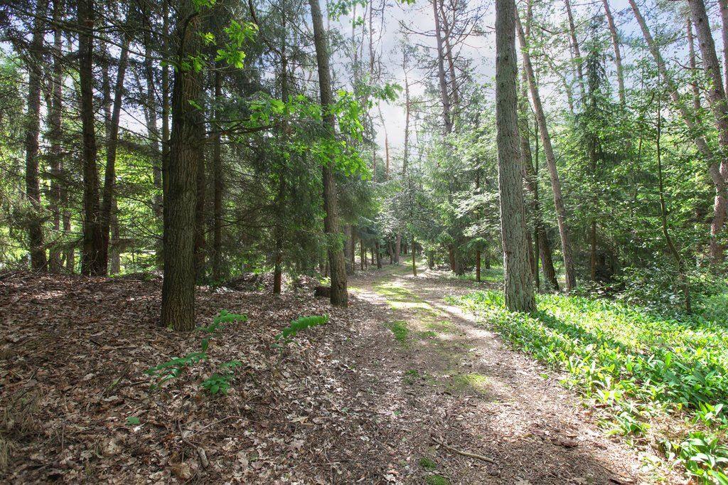 Bekijk foto 4 van Lage Bergweg 11
